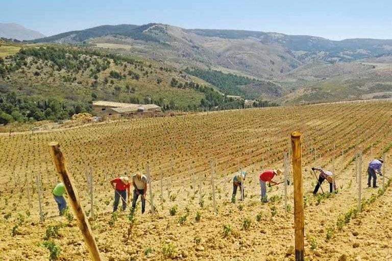 Rosati: l'Italia non corra per arrivare seconda