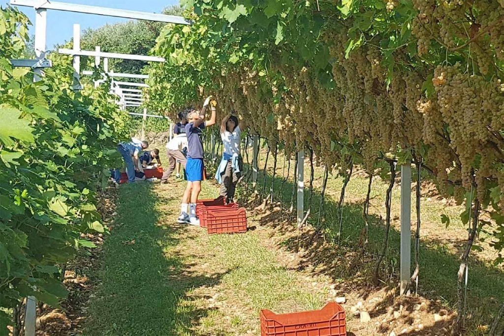 De-integrazione e mercato intermedio del vino