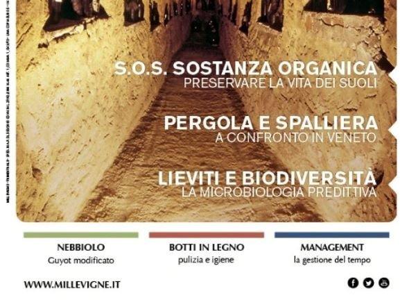 Basilicata, vigne o petrolio?