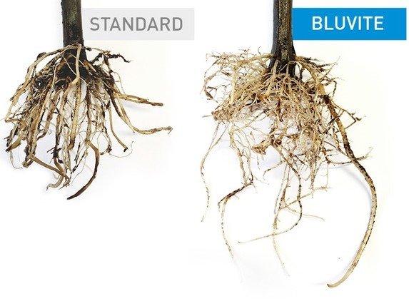 Ripristinare la fertilità del suolo e potenziare la crescita radicale con BluVite
