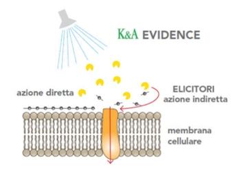 K&A EVIDENCE  rende la pianta soggetto attivo della propria salute