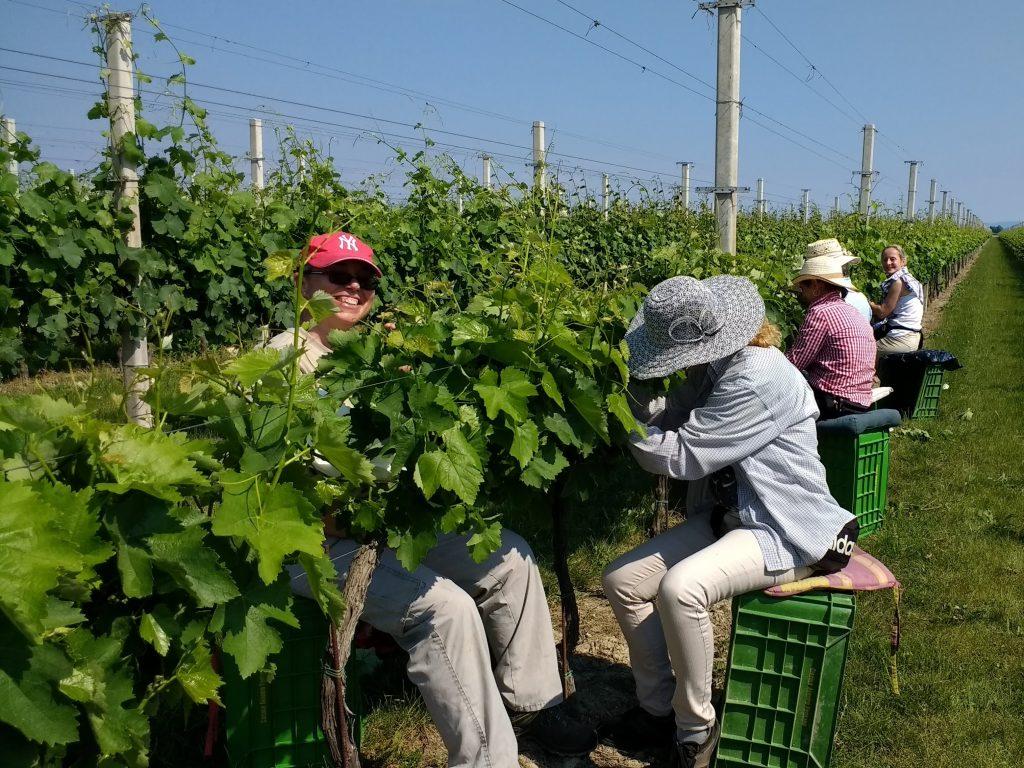 Mancano lavoratori agricoli