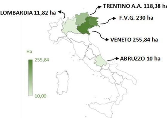 Attualità e prospettive dei vitigni resistenti