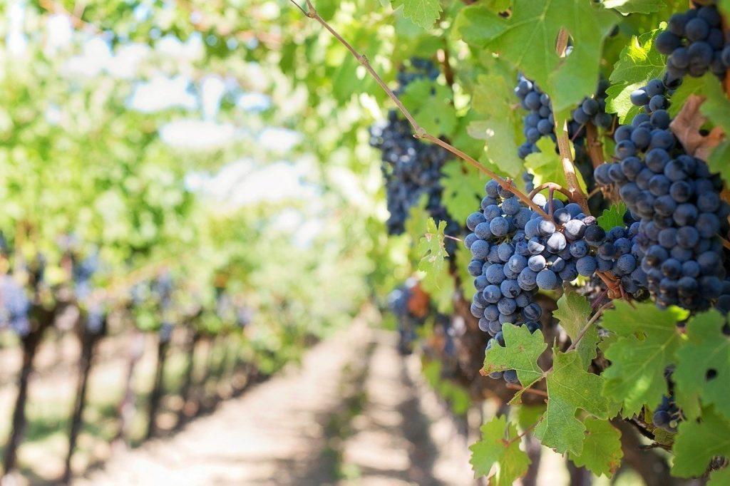 Estate 2021. Vigne Aperte in 460 Comuni italiani