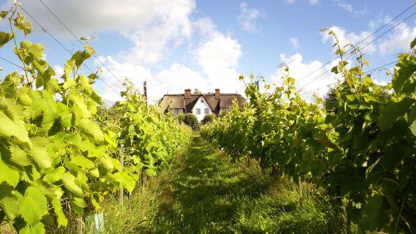 La viticoltura tedesca si sposterà a Nord?