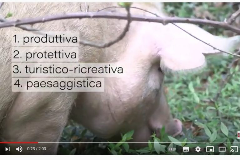 VIDEO: Food for forest, cibo per il bosco
