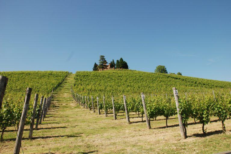 L'analisi del DNA svela l'origine dei vitigni piemontesi