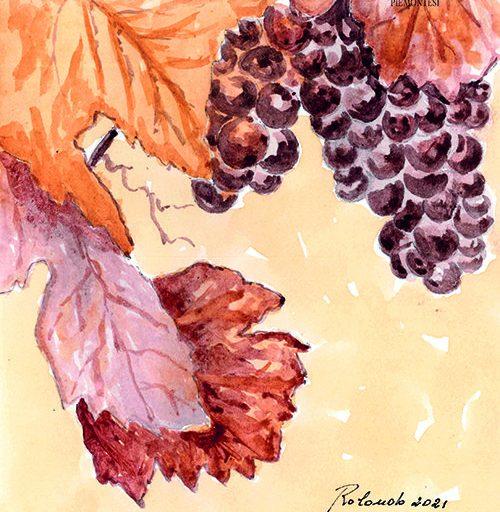 Mille vigne, tutte diverse