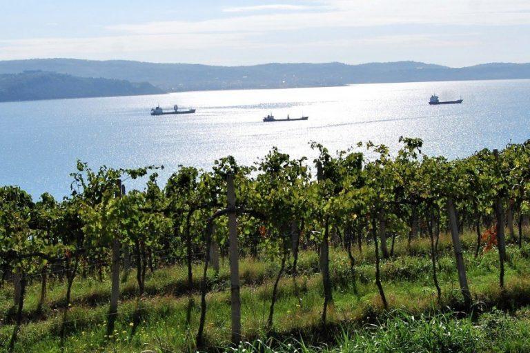 """Alto Adriatico: tre paesi, quasi un unico """"terroir"""""""